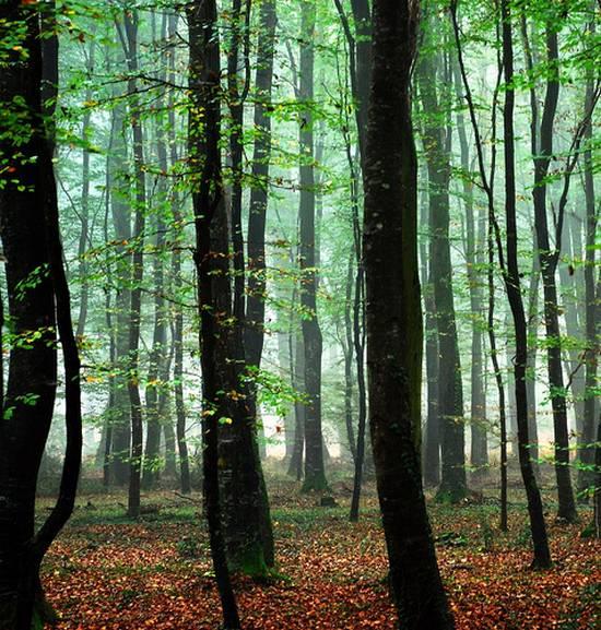 μοναδικά δάση (20)