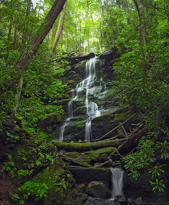 μοναδικά δάση (19)