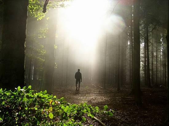 μοναδικά δάση (18)