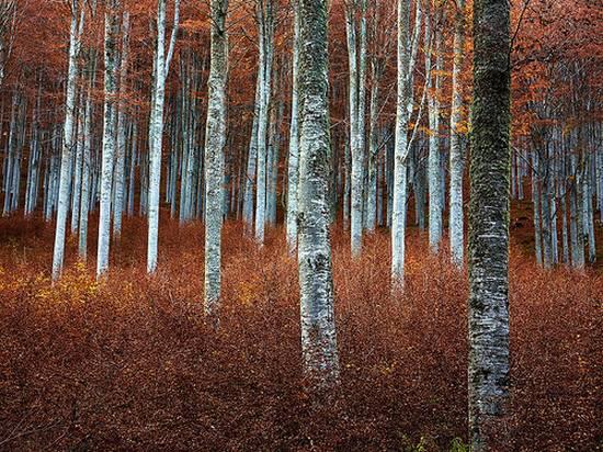 μοναδικά δάση (15)