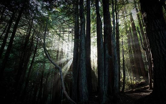 μοναδικά δάση (14)