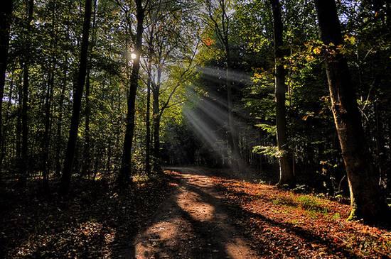 μοναδικά δάση (12)