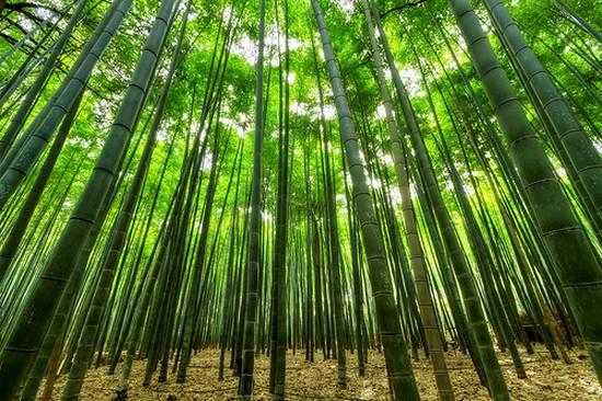 μοναδικά δάση (11)