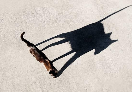 υπέροχες σκιές (6)