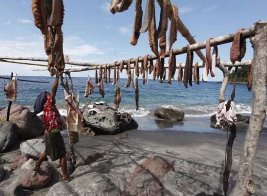 Κυνήγι φαλαινών στην Ινδονησία (1)
