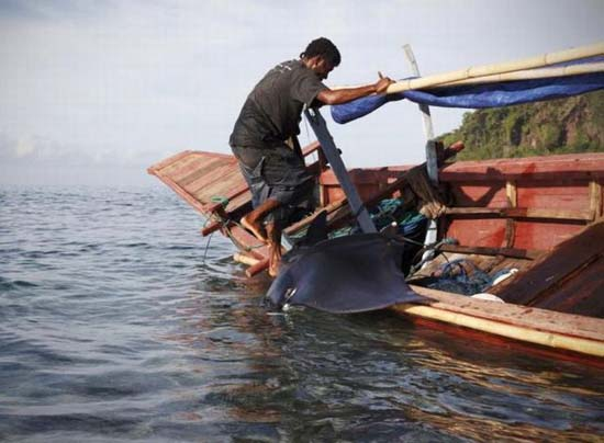 Κυνήγι φαλαινών στην Ινδονησία (8)