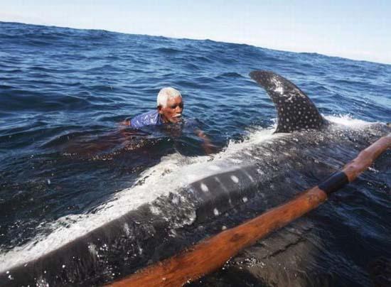 Κυνήγι φαλαινών στην Ινδονησία (11)