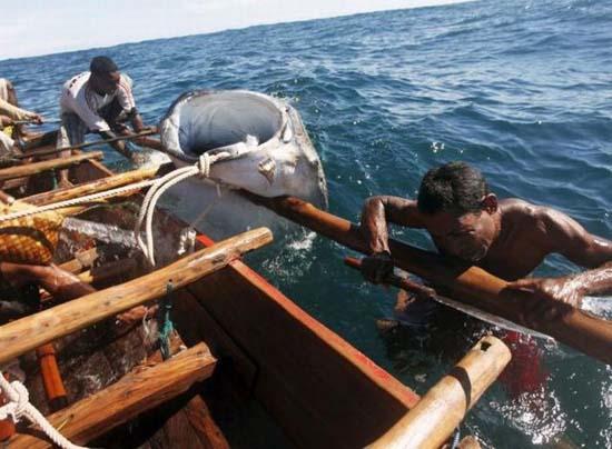 Κυνήγι φαλαινών στην Ινδονησία (16)