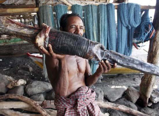 Κυνήγι φαλαινών στην Ινδονησία (21)