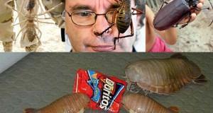 Τα 16 μεγαλύτερα έντομα στον κόσμο (Photos)