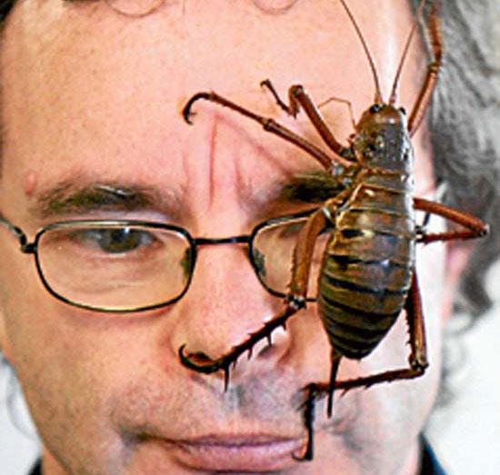 Τα 16 μεγαλύτερα έντομα στον κόσμο (8)