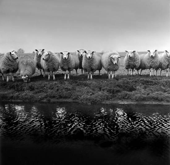 προβατα (17)