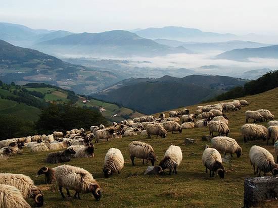 προβατα (13)