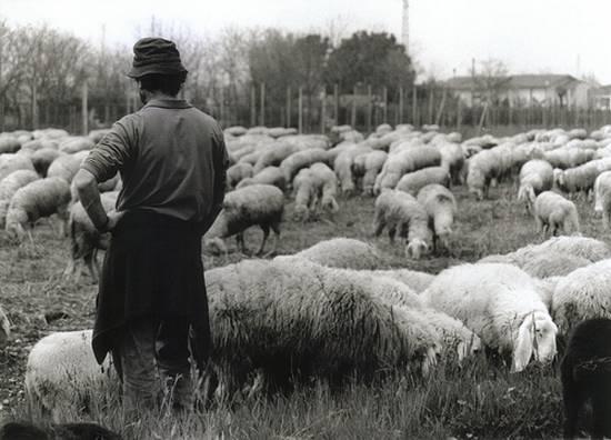 προβατα (8)