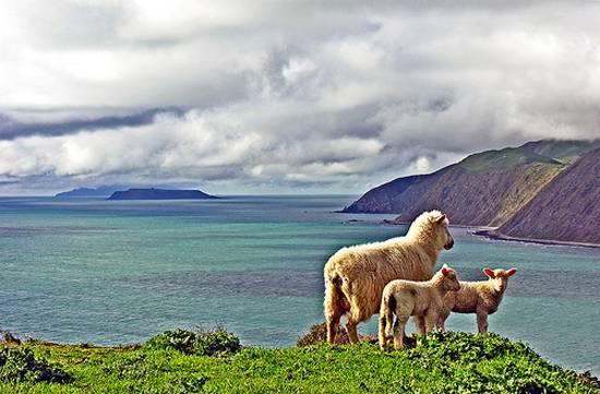 προβατα (6)