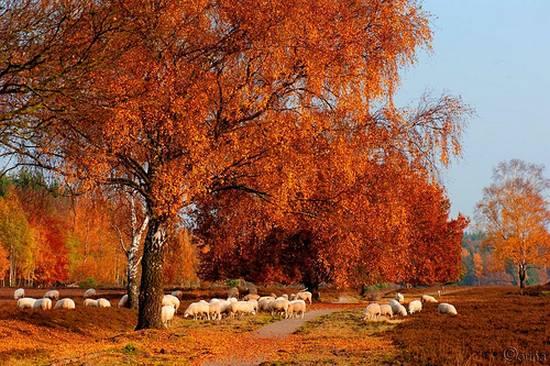 προβατα (3)