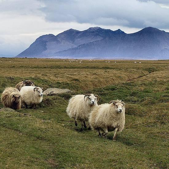 προβατα (1)