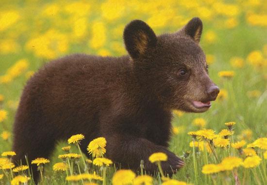 Με τι τρόμαξε το μωρό αρκουδάκι; (Video) (1)