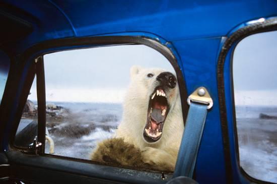 αρκούδα (1)