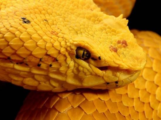 Ζωή σε κίτρινο (5)