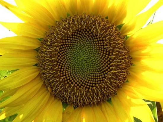 Ζωή σε κίτρινο (3)