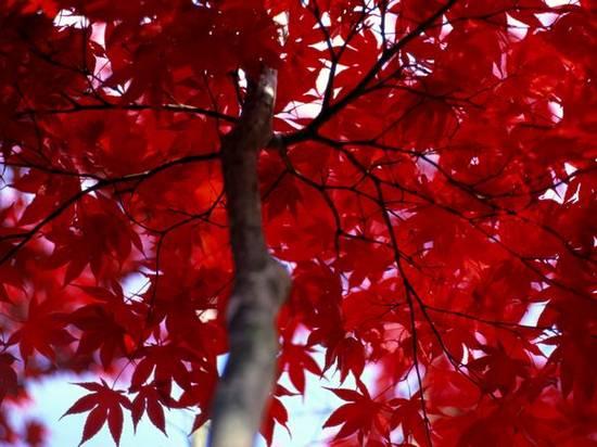 Ζωή σε κόκκινο (10)