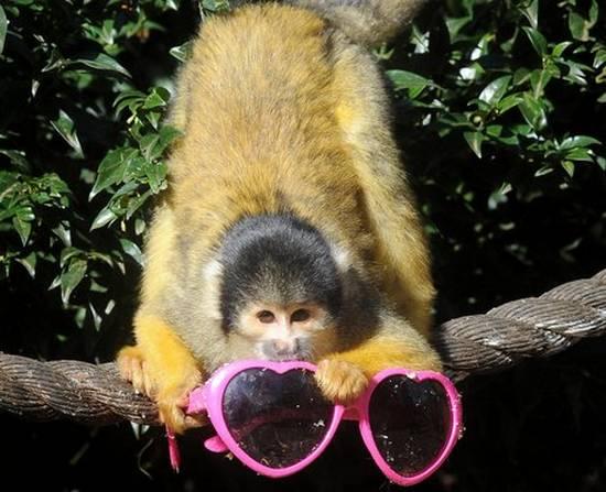 Μαϊμούδες (9)