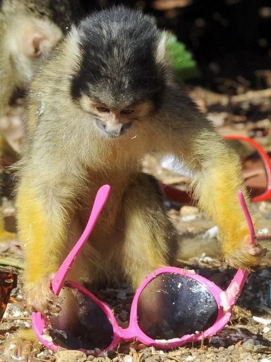 Μαϊμούδες (7)