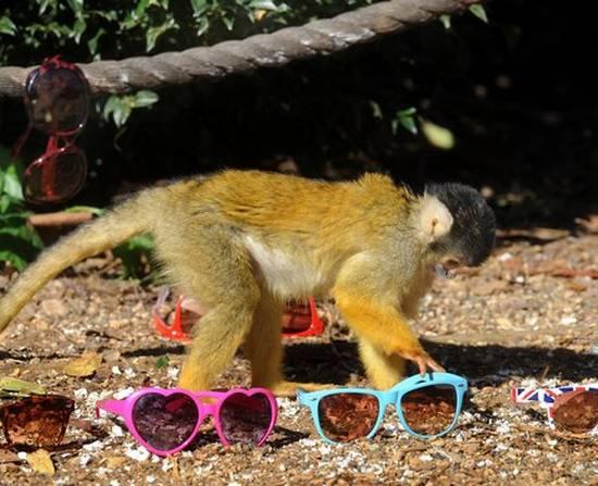 Μαϊμούδες (6)