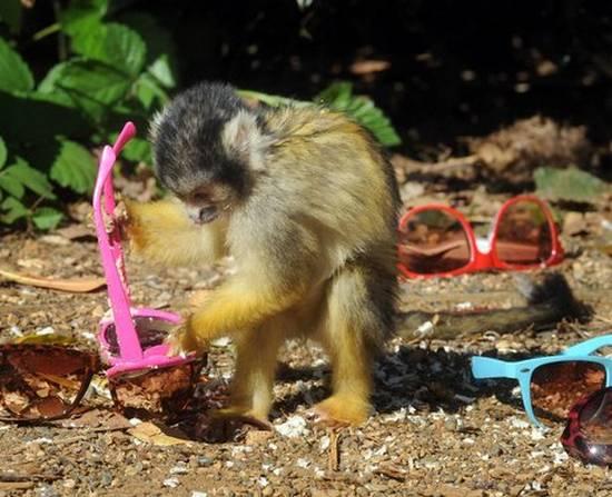 Μαϊμούδες (5)