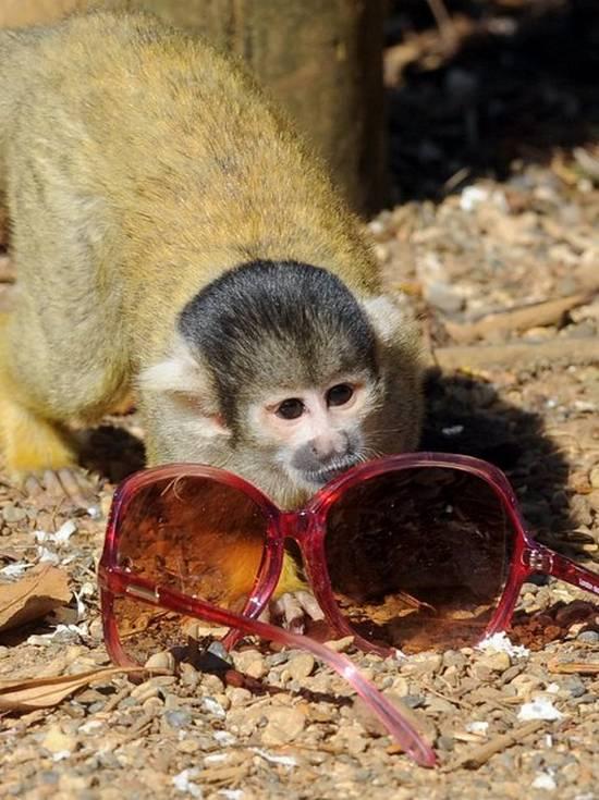 Μαϊμούδες (3)