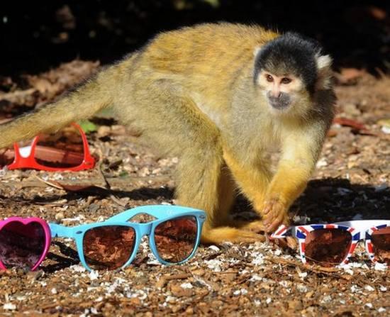 Μαϊμούδες (2)
