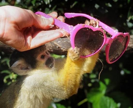 Μαϊμούδες (1)