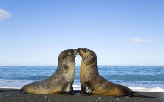 Φωτογραφία της ημέρας: ζευγαράκι στην παραλία...