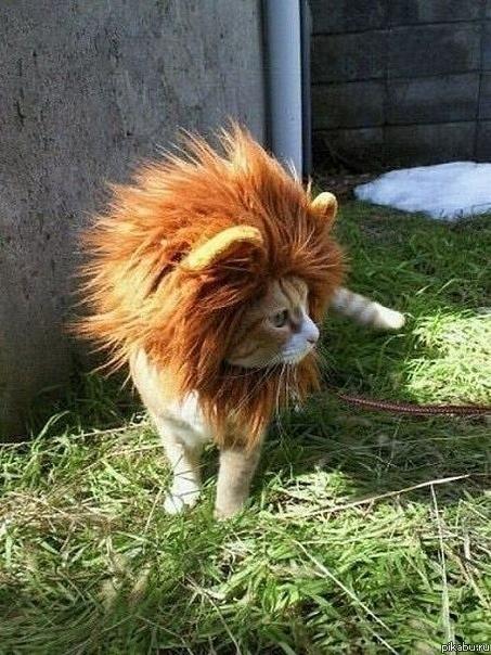 Φωτογραφία της ημέρας: Λιοντάρι μινιατούρα