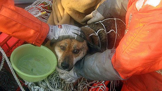 Σκύλος διεσώθη μετά από 3 εβδομάδες ανοιχτά στη θάλασσα