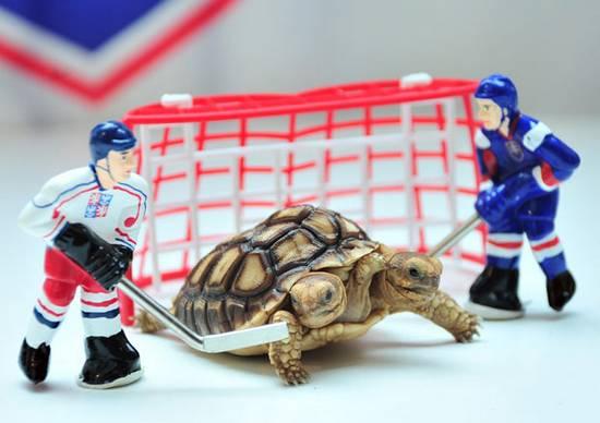 χελώνα (1)