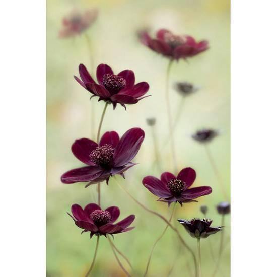 International Garden Photographer (17)