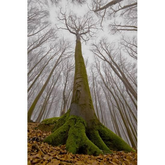 International Garden Photographer (12)