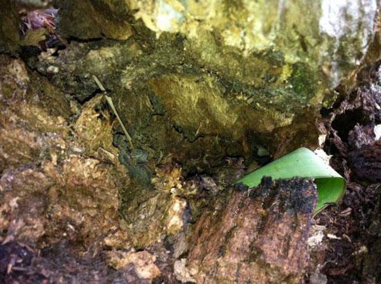 Εντοπίστε τον βάτραχο (1)