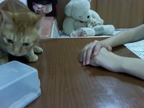 Η γάτα που θα κυριεύσει τον κόσμο