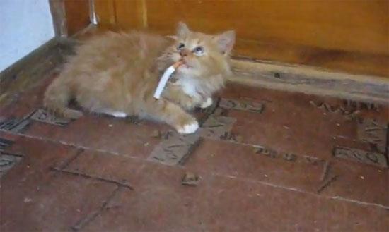 Γατάκι αρνείται να κόψει το τσιγάρο