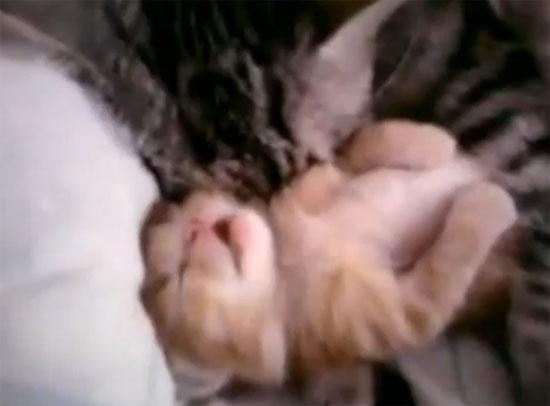 Το γατάκι που έκανε όλο το Internet να «λιώνει»