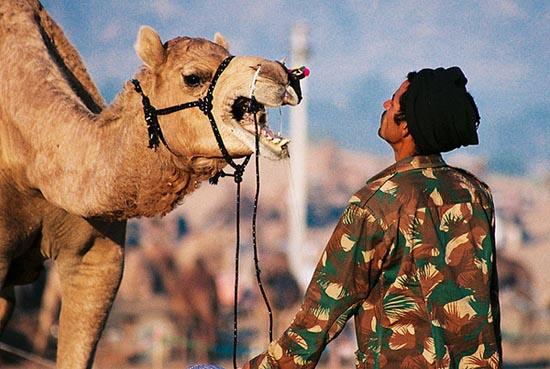 Καμήλες (7)
