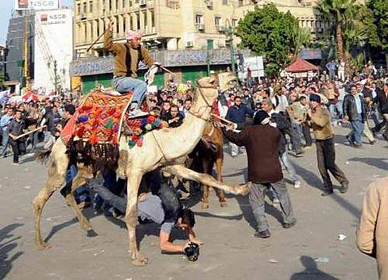 Καμήλες (8)