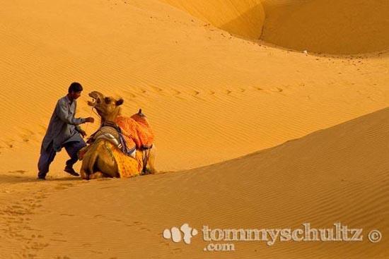 Καμήλες (9)