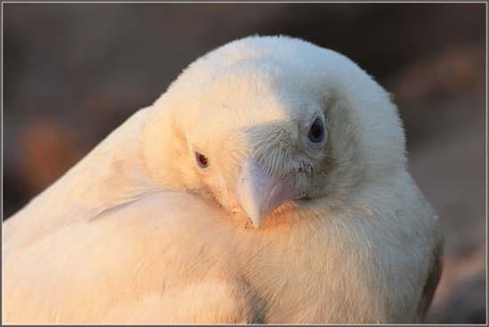 Έχετε δει ποτέ λευκό κοράκι; (5)