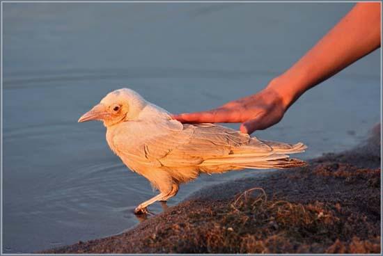 Έχετε δει ποτέ λευκό κοράκι; (4)