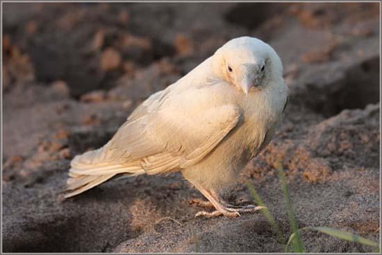 Έχετε δει ποτέ λευκό κοράκι; (3)