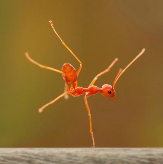 Φωτογραφία της ημέρας: Μυρμήγκι breakdancer